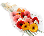 gerberas bunch