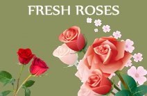 Send Fresh Roses, Roses bouquet, roses delivery in hubli, Bangalore, India